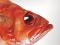 Welcher Fisch darf auf den Teller? Einkaufsratgeber von Greenpeace