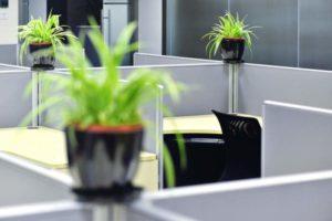 Pflanzen, Blumen, Grünpflanzen, Büro, Arbeit, Arbeitsplatz